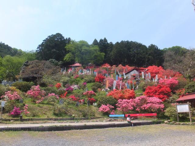 五大 尊 つつじ 公園
